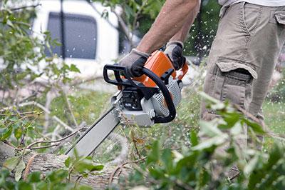 tree removal sarasota